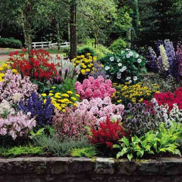 The Complete Cottage Garden Collection