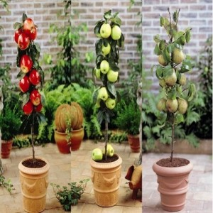 Dwarf Growing Fruit Tree Collection