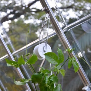 Greenhouse Trellis Kit