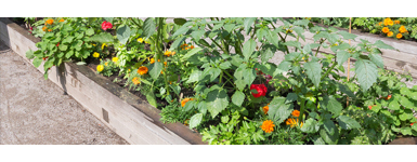 Our Guide on Raised Bed Gardening